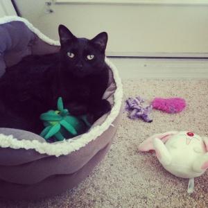 Kitty-Lu